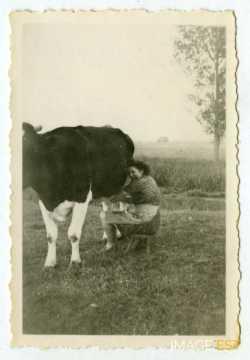 Femme trayant une vache (Muzeray)