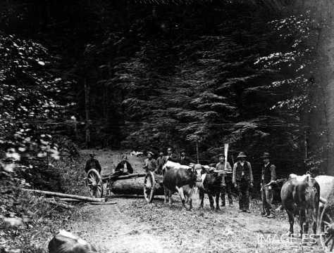 Transport de tronces (Vosges)