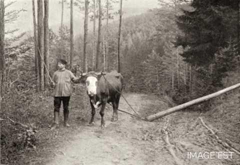 Transport du bois (Vosges)
