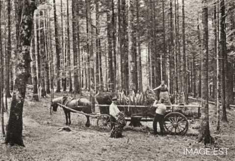 Enlèvement d'écorces (Vosges)