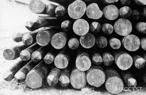 Poteaux de bois (Arches)
