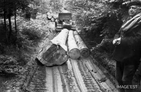 Transport de grumes (Abreschviller)
