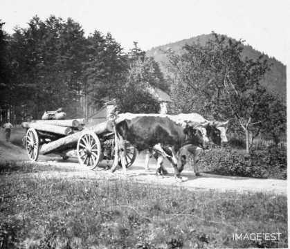Débardage de tronces (Vosges)