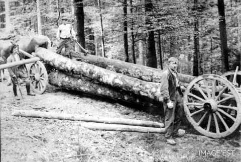 Transport de grumes (Vosges)
