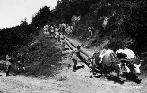 Débardage de grumes (Vosges)