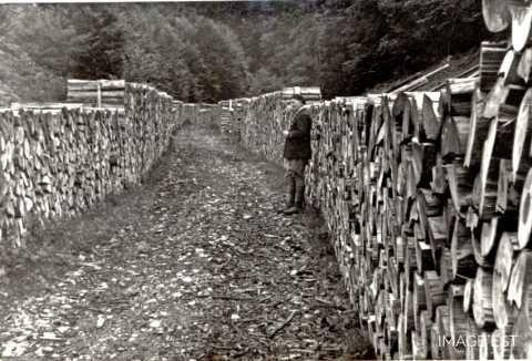 Classement des bois (Alsace)