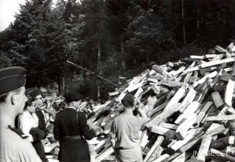 Station arrivée du bois