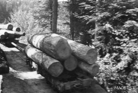 Wagons de grumes (Abreschviller)
