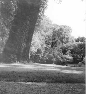 Parc du Château de Wendel (Hayange)